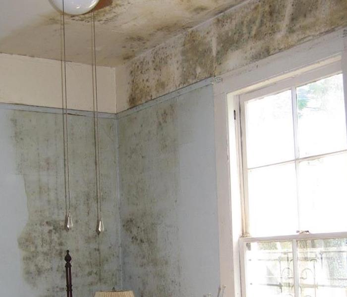 Mold Damage To Household Materials And Structures