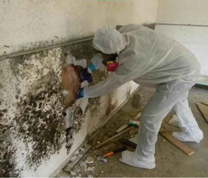 Mold in Commercial Buildings.