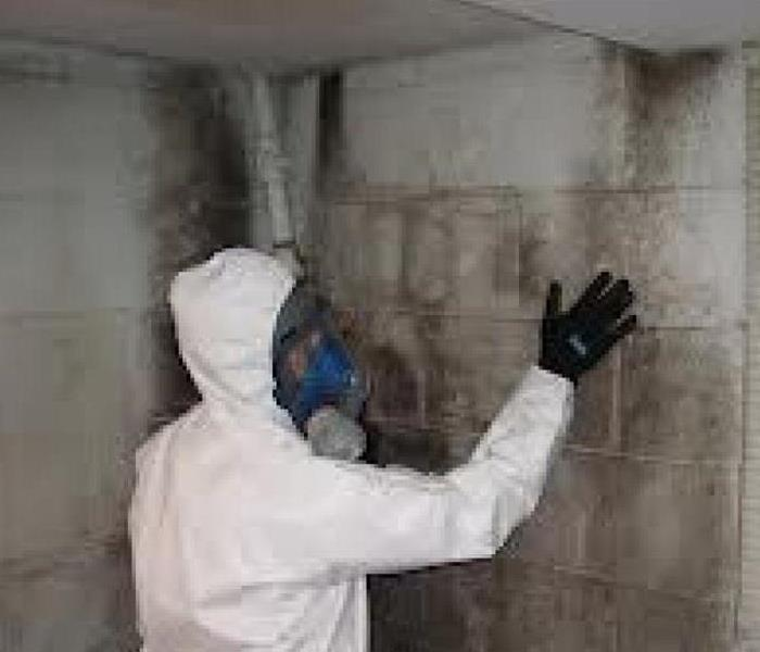 For Help Repairing Mold Damage
