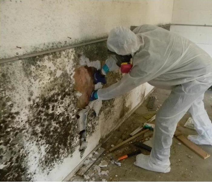 Mold Remediation Mold Remediation Company Vs. Do-it-Yourself