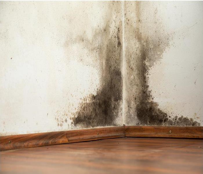 Commercial Mold Remediation in Schools and Commercial Buildings